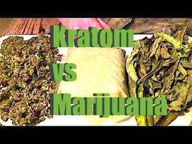 Kratom and Marijuana