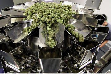 Cannabis Packaging